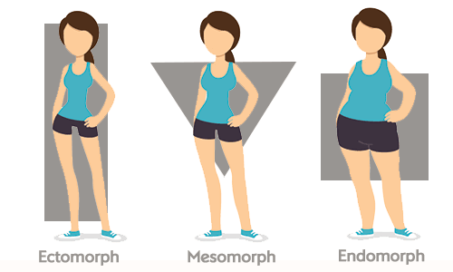 Ectomorph, endomorph, mesomorph