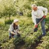 Gardening without causing injury
